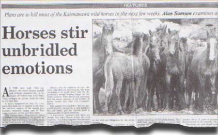 Horses stir unbridled emotions